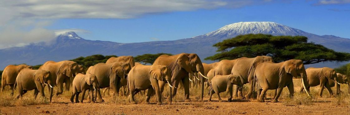 kenya-слоны