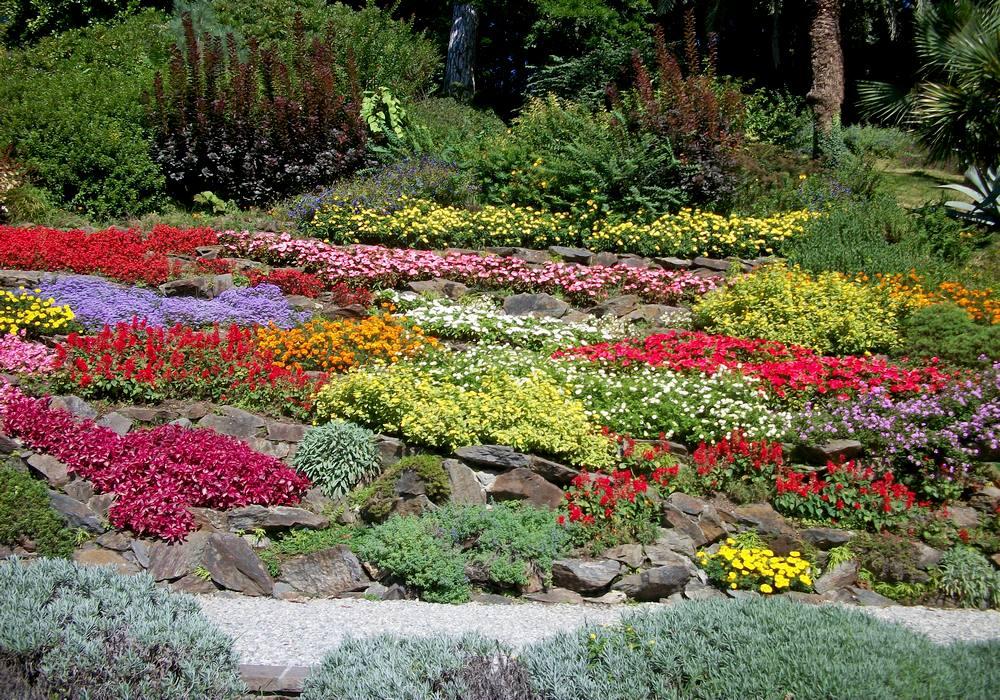 альпийская горка цветы