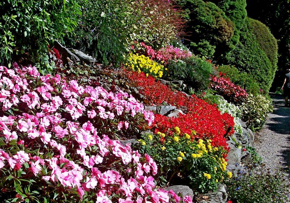 цветы италия