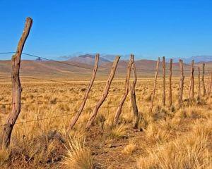 pampasi-_argentina