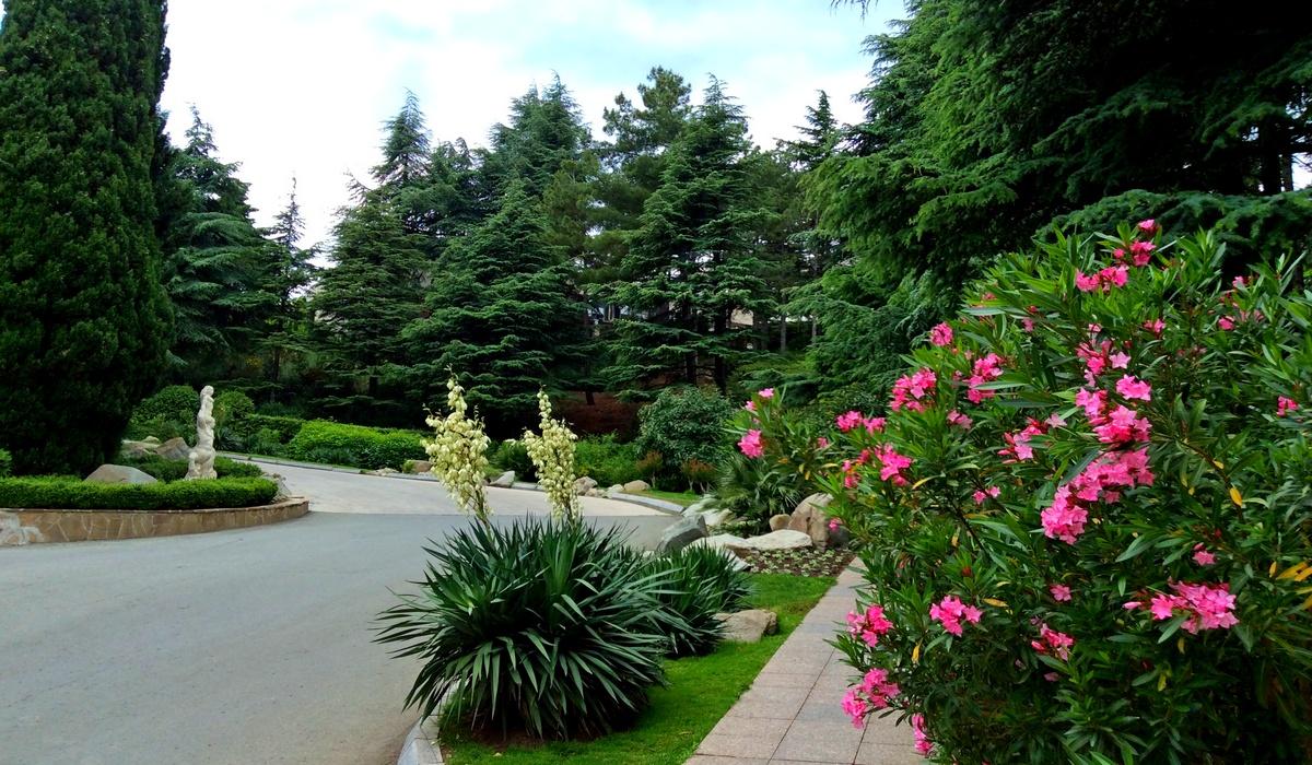 цветущий олеандр - парк Айвазовского