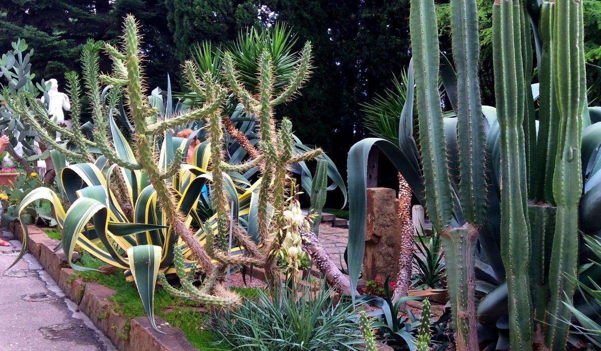 Мексиканский сад - парк Айвазовского