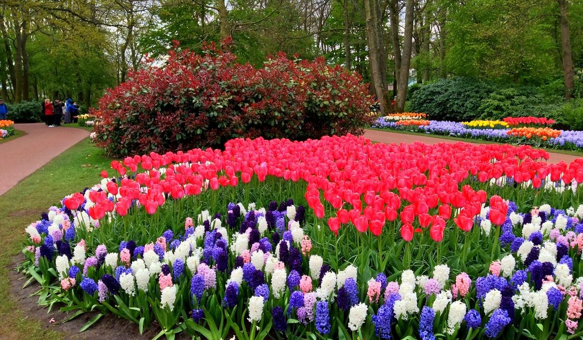 весенняя выставка цветов в парке Кёкенхоф