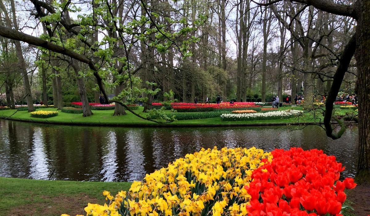парк тюльпанов Кёкенхов