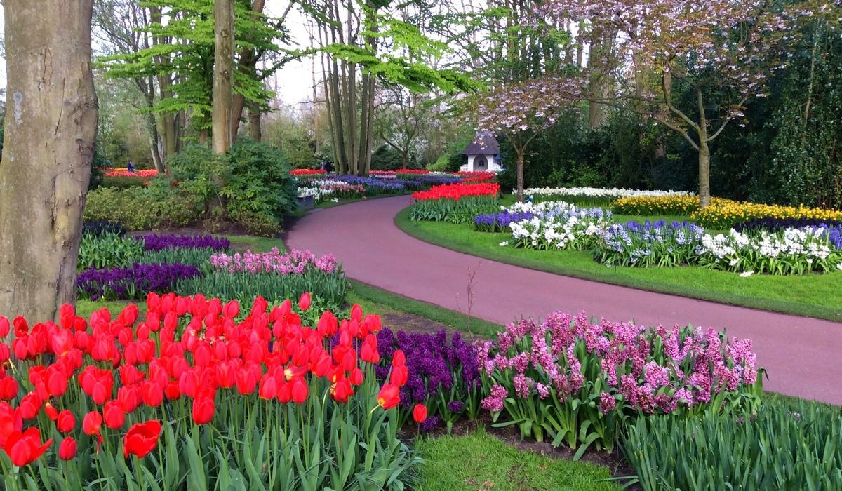 нарциссы, тюльпаны, гиацинты, фрезии - Кёкенхов