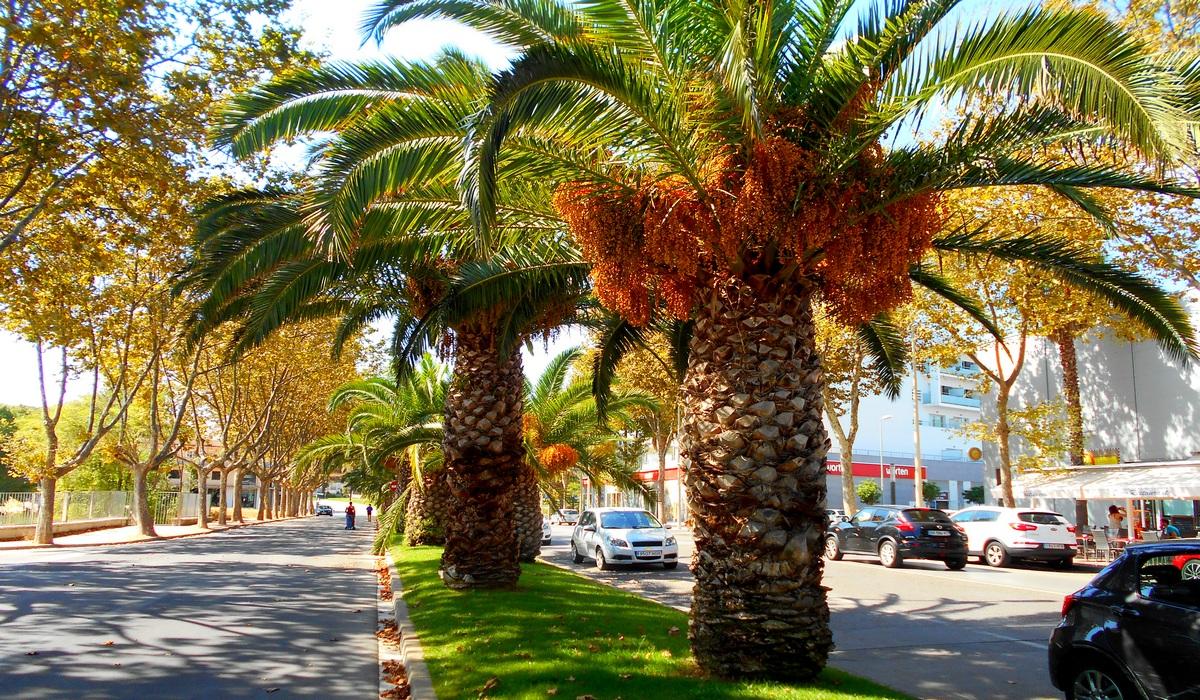 пальма испания