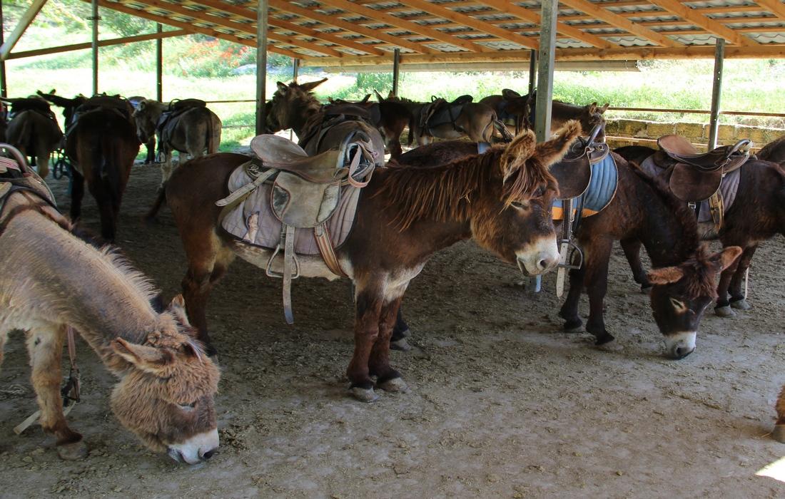 ослы на ферме чудо-ослик
