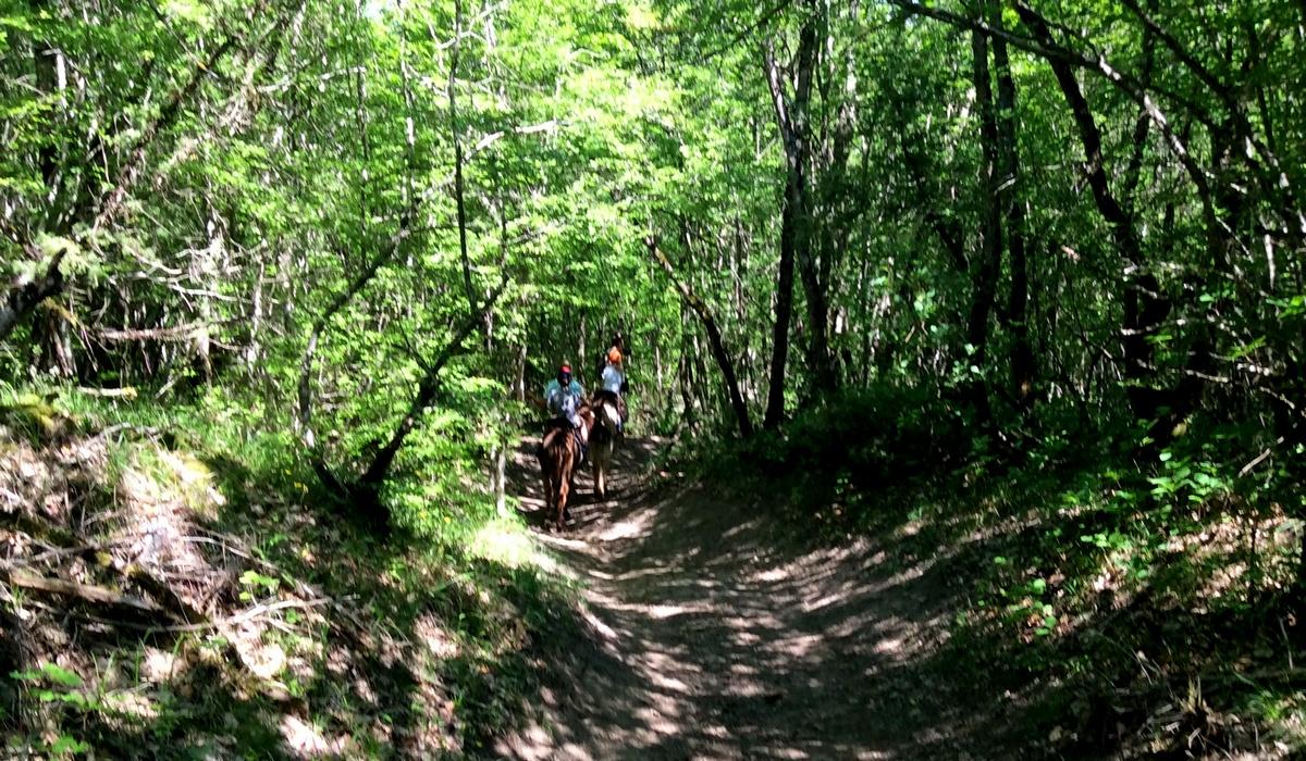 дорога на осликах через лес