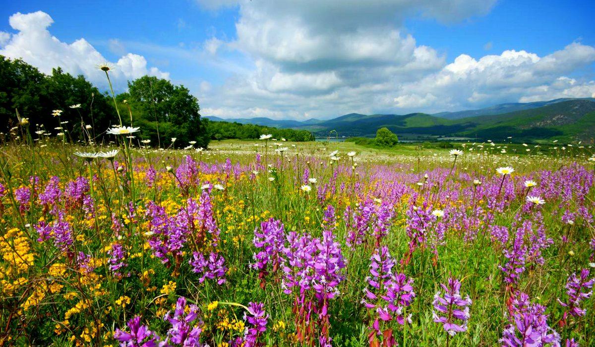 Цветы Байдарской долины