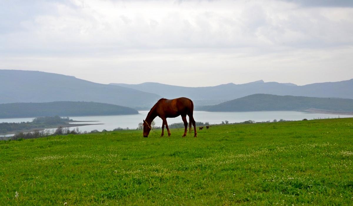 Лошадь в Байдарской долине - Крым