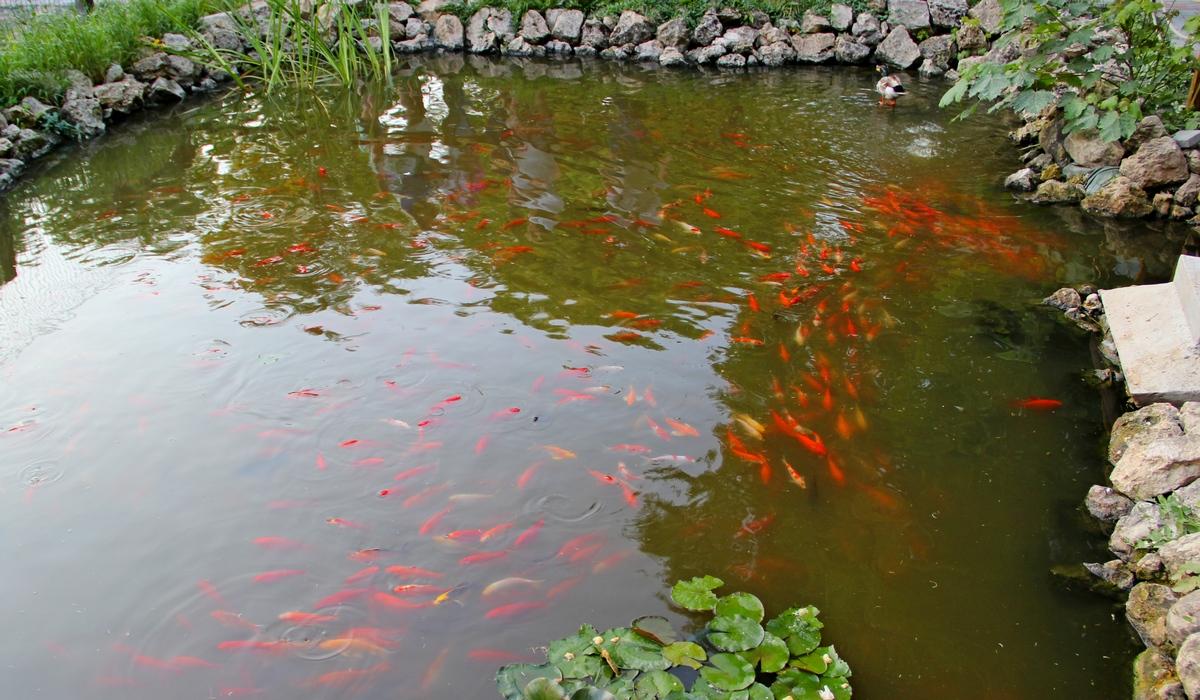 Зоопарк-Бахчисарай, рыбки