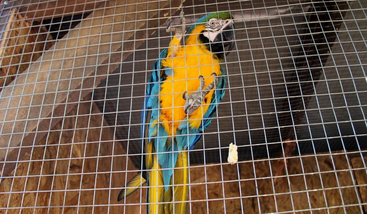 Зоопарк-Бахчисарай, попугай